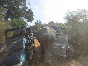 16 aug c Yala NP olifant