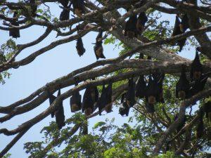 17 aug j vleermuizen